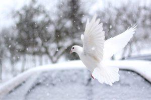 Šventoji dvasia Visų Šventųjų bažnyčia sutvirtinimo sakramentas